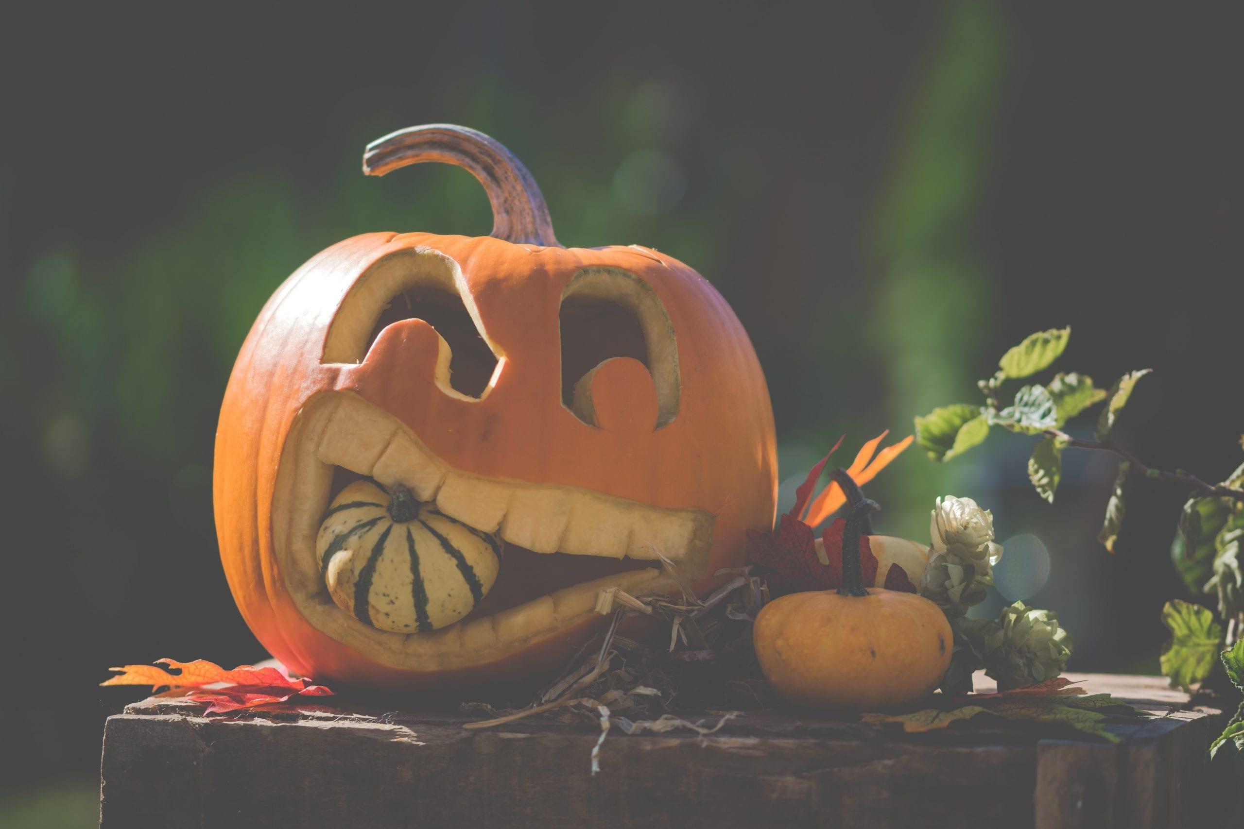 autumn-decoration-fall-1456124