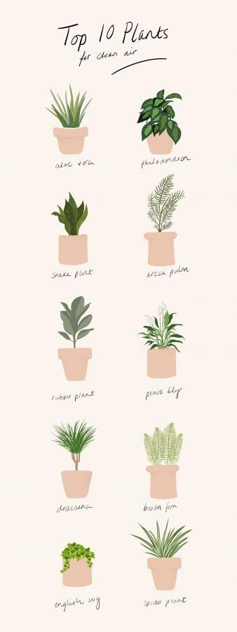 Top 10 House Plants For Cleaner Air Eco Age